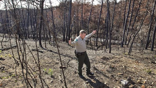 Todd McClanahan, the Bastrop State Park superintendent at the time, is shown in December 2011 amid the scorched trees from the Bastrop Complex Fire that had struck three months earlier.