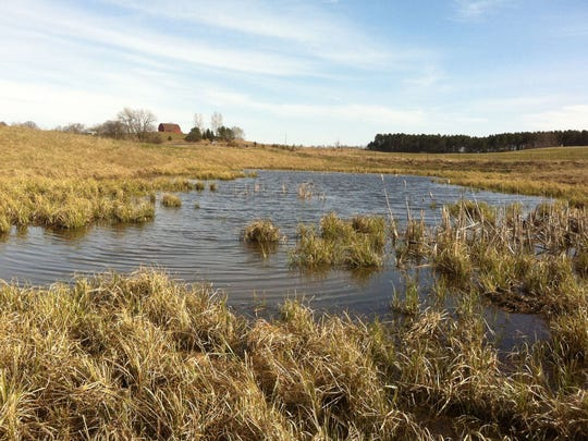 Wetlands such as this one on a farm in St. Croix County