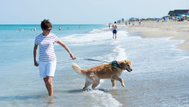 """Duffy, a 7-year-old golden retriever, and his owner Beverly Anderson, a seasonal resident of Stuart, play on the beach Monday on South Hutchinson Island. Duffy is the oldest dog in the Golden Retriever Lifetime Study, a $32 million research project studying about 3,000 golden retrievers, called Heroes, for the duration of their lives. """"This is the way to give back,"""" Anderson said, who has lost two other purebred golden retrievers to cancer. """"The Heroes won't benefit from the study but the puppies will."""" The researchers will use the information to investigate how genetics, nutrition, environment and lifestyle impact major health outcomes, especially cancer, according to the Morris Animal Foundation. To see more photos, go to TCPalm.com."""