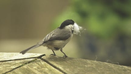 Don't use dryer lint for birds to use as nesting material, as it contains chemicals that are harmful to the birds.