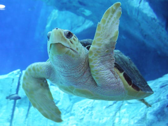 World Sea Turtle Day 1