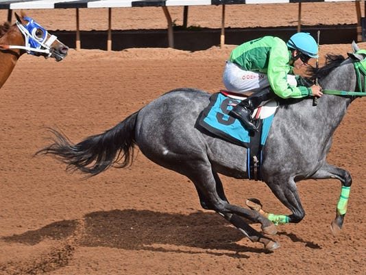 636016068448158865-Mountain-Top-NM-QH-Futurity-Trial-10-Running-Dragon-9.jpg