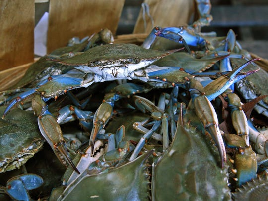 Basket of Blue Crabs caught on the first day of Blue