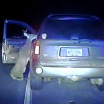 When deer strike back: Animal, hit by car, tries to get to N.J. driver
