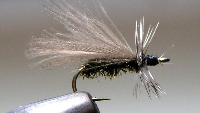 One of the effective flies for fall trout fishing is the Black Stonefly (Peacock) pattern.
