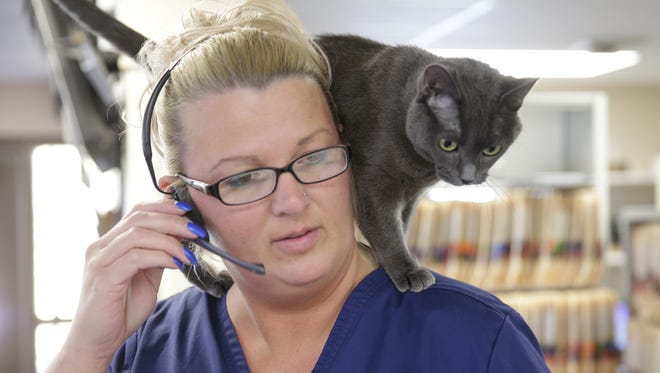 Birdie Slayer hitches a ride on the shoulders of Kristi Bouchard at the Animal Hospital of De Pere. She's the official feline mascot of the business, where she has all the staff trained to be at her beck and call.