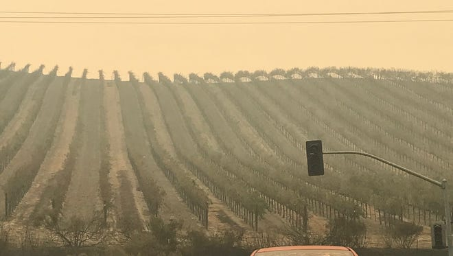 Burned vineyards in Sonoma County, Calif., a result of the fires sweeping the state's northern California wine-growing region in Oct. 2017.