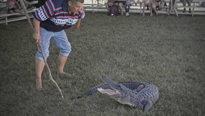 Alligator wrestling during last year's American Indian Arts Celebration. The annual event turns 20 with a celebration on Nov. 3-4 at The Seminole Tribe of Florida Ah-Tah-Thi-Ki Museum.