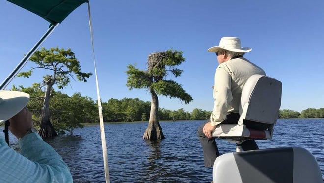 As part of an annual survey April 26, 2018, Richard Baker, right, and Donna Halleran, with binoculars, look for a silver dollar-sized tag identifying an osprey nest on Blue Cypress Lake in western Indian River County.