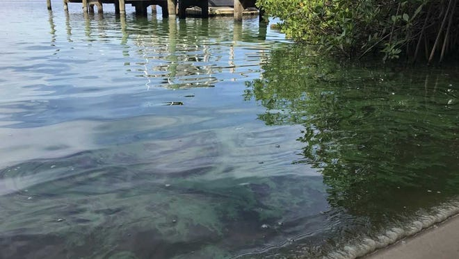A possible blue-green algae bloom appeared Monday, June 11, 2018, in the St. Lucie River behind Stu Lamb's home on St. Lucie Crescent in Stuart.