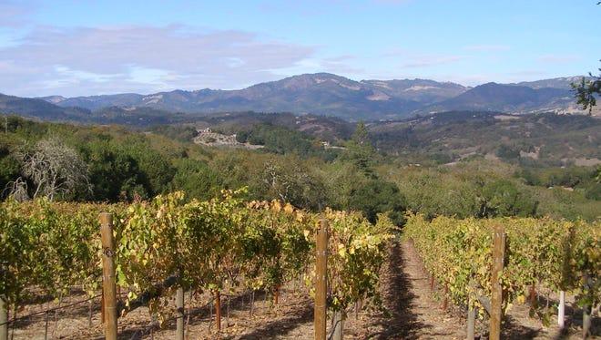 A Sonoma County vineyard.