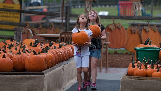 Olivia Verdi and Emily Maston, front, carry their pumpkins at the Johnson Farms in Medford during the Fall Harvest Festival.