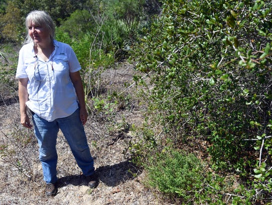 Cheryl Peterson, manager of the Rare Plant Conservation