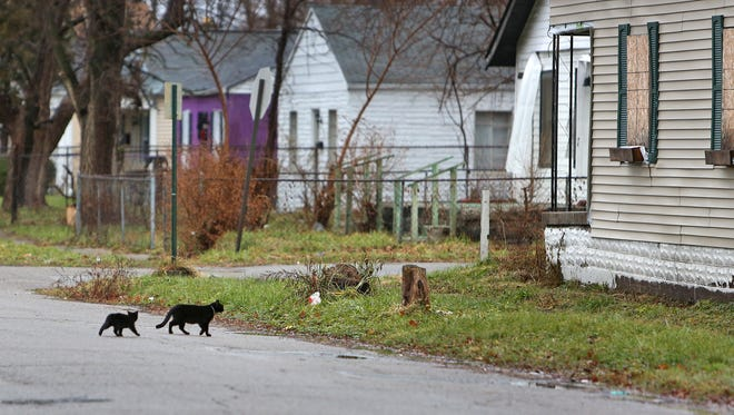 Two cats walk across Arsenal, in the Hillside neighborhood, Wednesday, December 24, 2015.  Many houses remain abandoned and boarded up in this neighborhood.