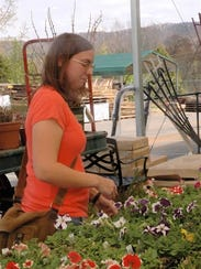 Amanda Koontz of Halls looks over the petunias at the Mayo garden center in Powell. Koontz is a 2006 greenhouse major at the Walter State Community College and enjoys being around plants.