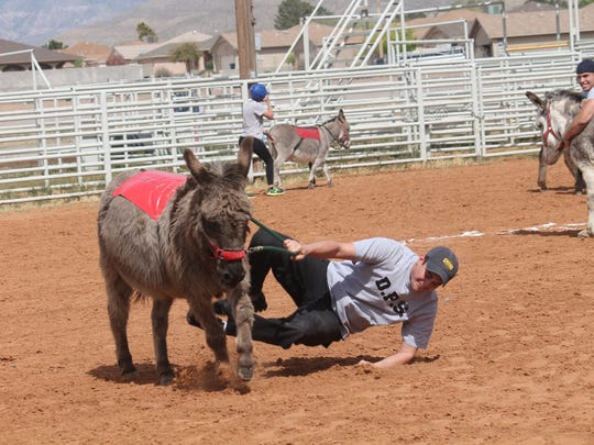A member of the Otero County Sheriff's Department gets bucked off his donkey during Saturday's game.