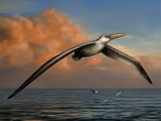 Huge Wingspan.jpg