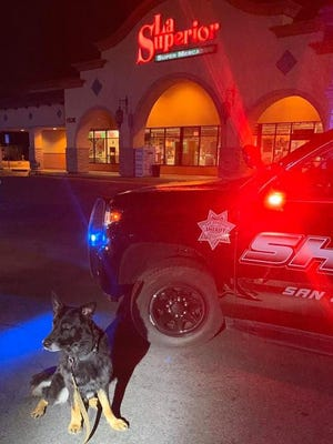 Sheriff's Office K-9 Max waits patiently early Saturday after being injured above its right eye by a six-pack of beer bottles wielded by a burglary suspect in east Stockton. Max is OK. The burglary suspect, thanks to Max, was arrested.