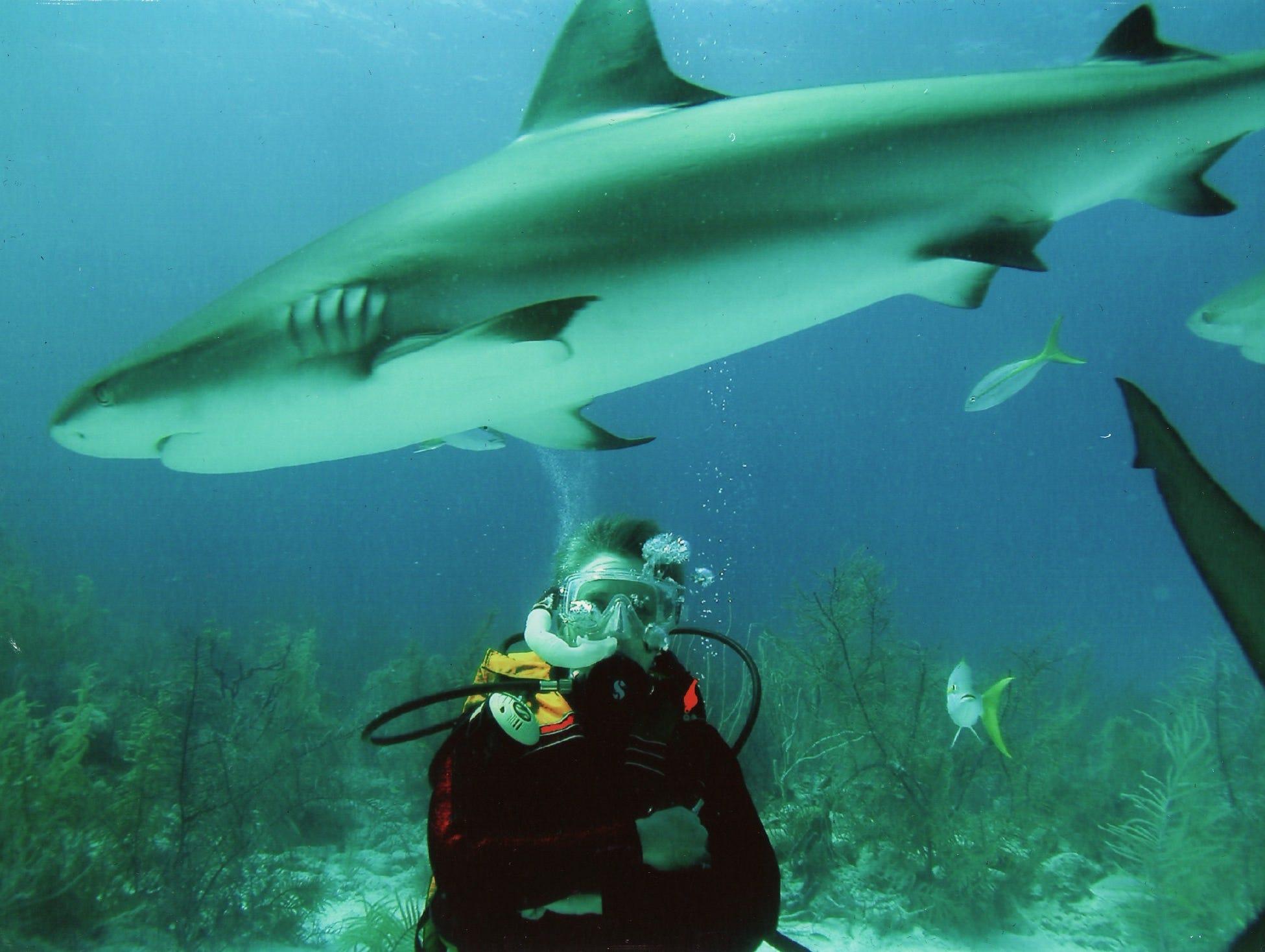 shark defender