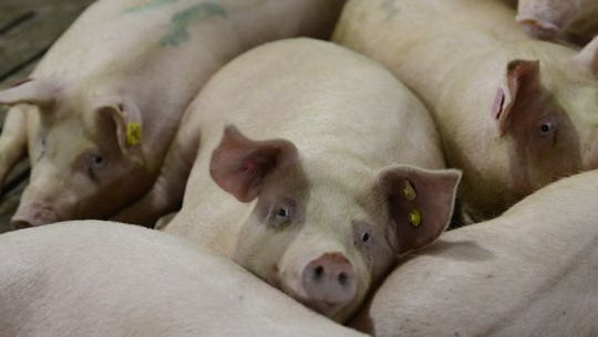 Forty-three families in Iowa have formed a covenant preventing manure from being spread on their combined 5500 acres in an effort to fight pollution of their water and air after several failed attempts to thwart the rise of large hog confinements.
