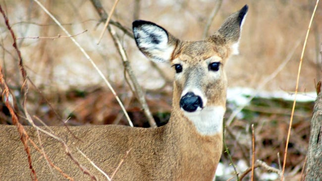 Federal employees plan to shoot deer at the Gettysburg battlefield and Eisenhower National Historic Site as part of their annual deer management program.