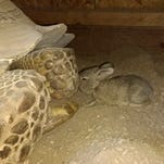 Tortoise and hare become fast friends in adorable real-life Tucson fable