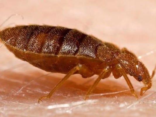 1- Bed Bug