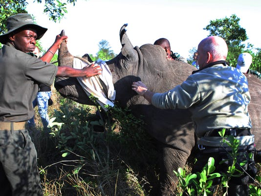 South Africa Rhino Relocation