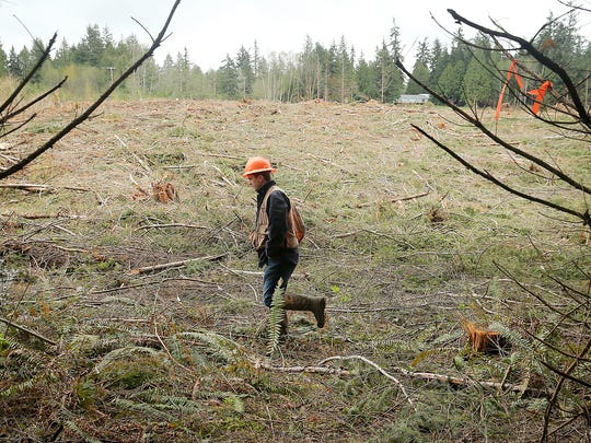 FILE PHOTO – Pope Resources Hood Canal area manager Griffin Chamberlin walks at a timber harvest site near Hansville in April.
