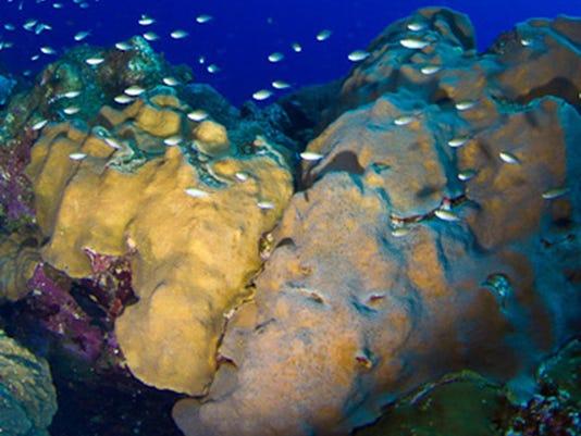 Endangered Coral _Radw.jpg