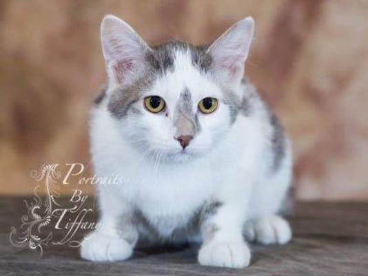 WDH 0615 Pet of the Week-Samuel