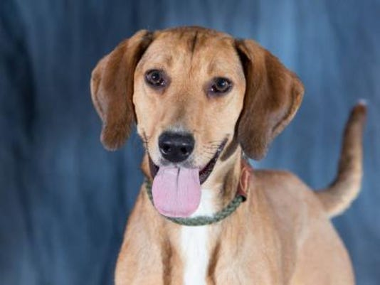 WDH 0831 Pet of the Week-Briley