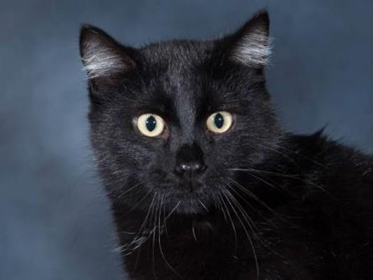 WDH 0829 Pet of the Week-Fred