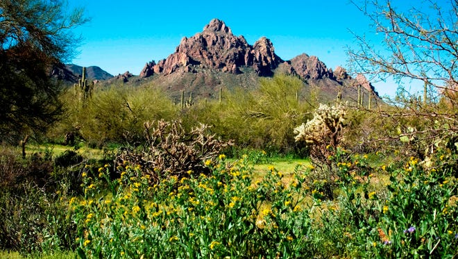 View of Ragged Top Mountain at Ironwood Forest National Monument.