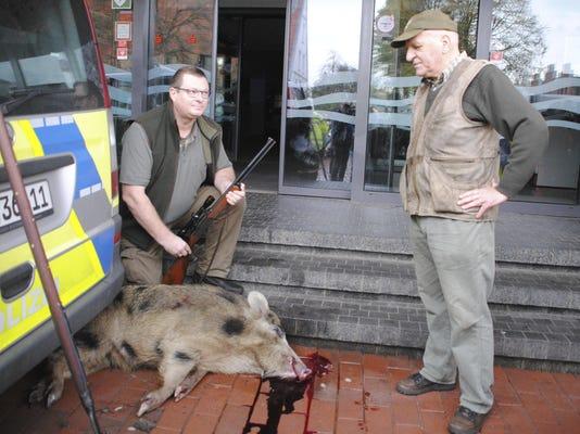 Germany Boar Rampage
