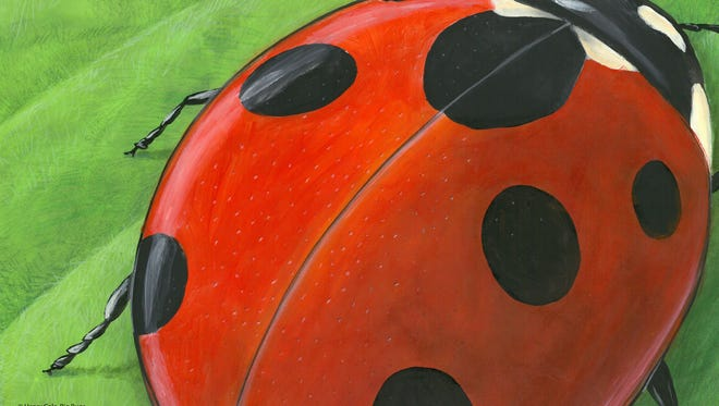 """One of several featured art pieces in the upcoming """"Drawn to the Arts"""" exhibition at Lighthouse ArtCenter in Tequesta is pictured. ©Henry Cole, from BIG BUGS, Ladybug!"""