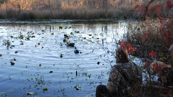 ***********************      Photo Caption    With the first segment of duck season opening Saturday,  Upstate duck hunters are opting to take advantage of available public hunting in the region.
