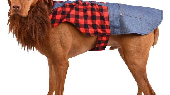 A lumberjack costume for a dog for Halloween from Target.