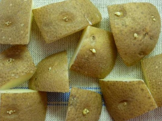635938122909541217-Seed-potatoes.jpg