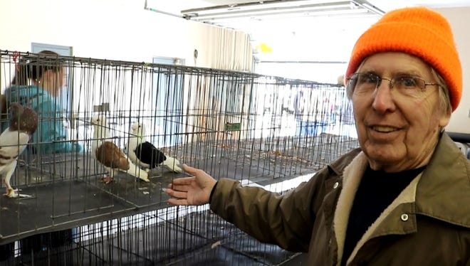 Larry Gardner, president of the Fremont Pigeon Club, hopes the centuries-old hobby of pigeon keeping begins to grow again.