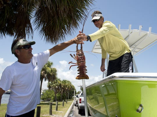 """It was a nice day to be on the water but it wasn't so good for lobstering,"" said Bob Ernst (right) of Palm City who hands one of two lobsters he caught to his friend, Greg Forest (left) on Wednesday, the opening day of lobster mini-season, at the Sandsprit Park Boat Ramp in Stuart.  ""We go every year and usually catch our limit or get close to it.  We went to our regular spots this year and the lobsters just weren't there.  We also ran into some dirty water and it was cold on the bottom,"" said Ernst.