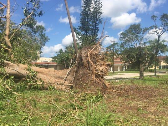 Hurricane Irma-Tree on cars