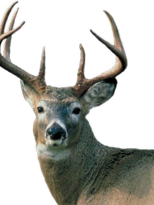 635544032391400263-Deer-01