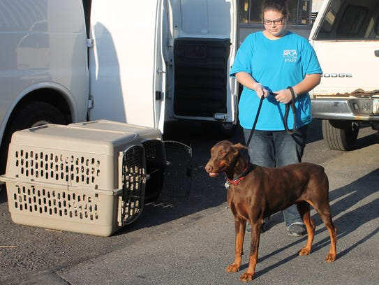 A doberman named Molly was among debarked dogs rescued