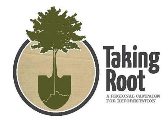 taking root.jpg