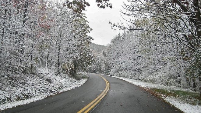 Rick Marsi found a grapevine along this road, near Norway spruce trees down the road on the right.