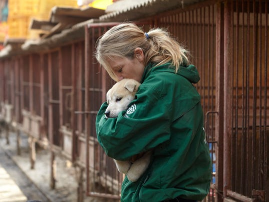AP HUMANE SOCIETY INTERNATIONAL RESCUES 57 DOGS FROM THE DOG MEAT TRADE IN SOUTH KOREA