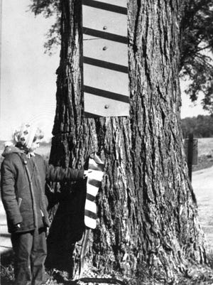 The location of Sheboygan County's Liberty Tree was blamed for one death and multiple accidents. As a result, the 300-year old elm, despite the warning devices shown in this photo, was at the center of a debate demanding it be chopped down.