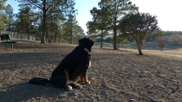 The possible displacement of the village dog park south of the White Mountain Sports Complex could be over at least for now,