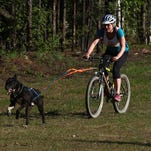 Emilie Entrikin and Toco compete in the 1.75-mile one-dog bikejor during the Alaska Skijoring and Pulk Association Spring Fling Dryland Race at Birch Hill Recreation Area on May 17.